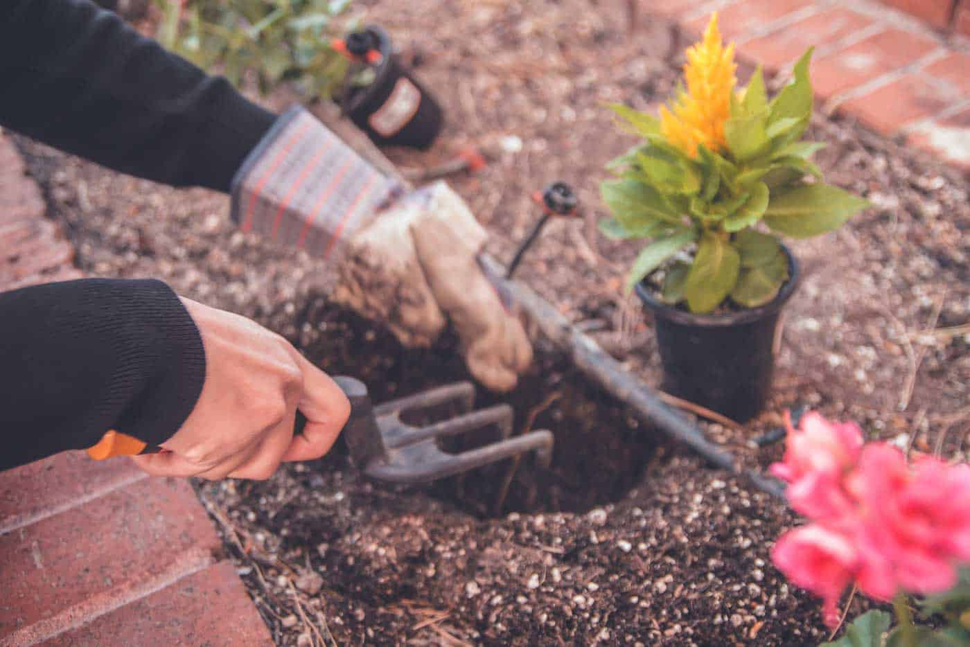 Best Ways to Save Money on Landscaping