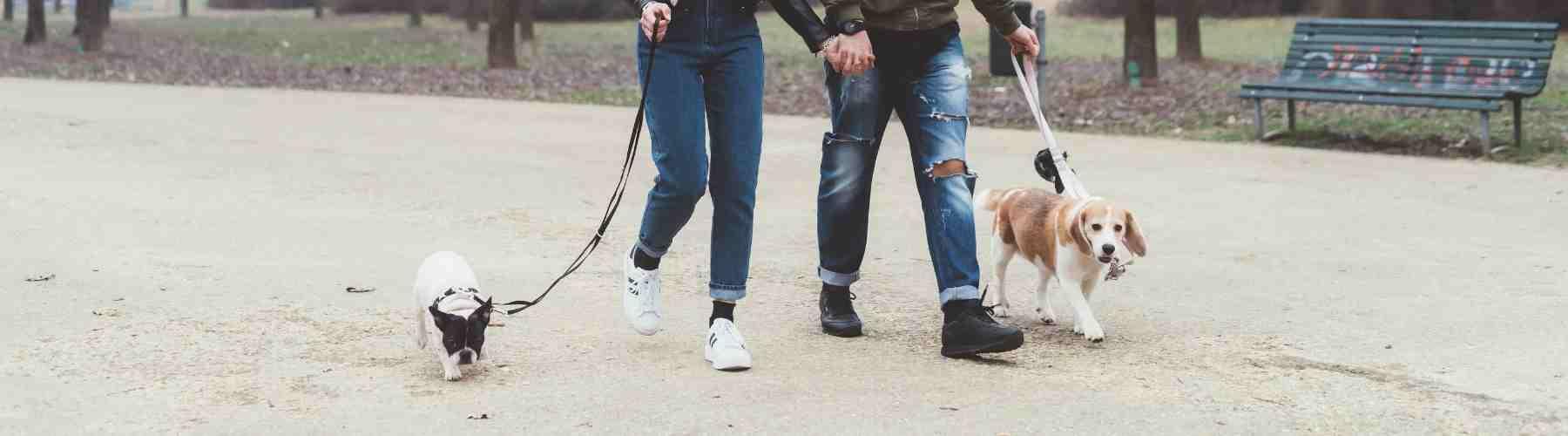 Passive Income College Students - Walk Dogs