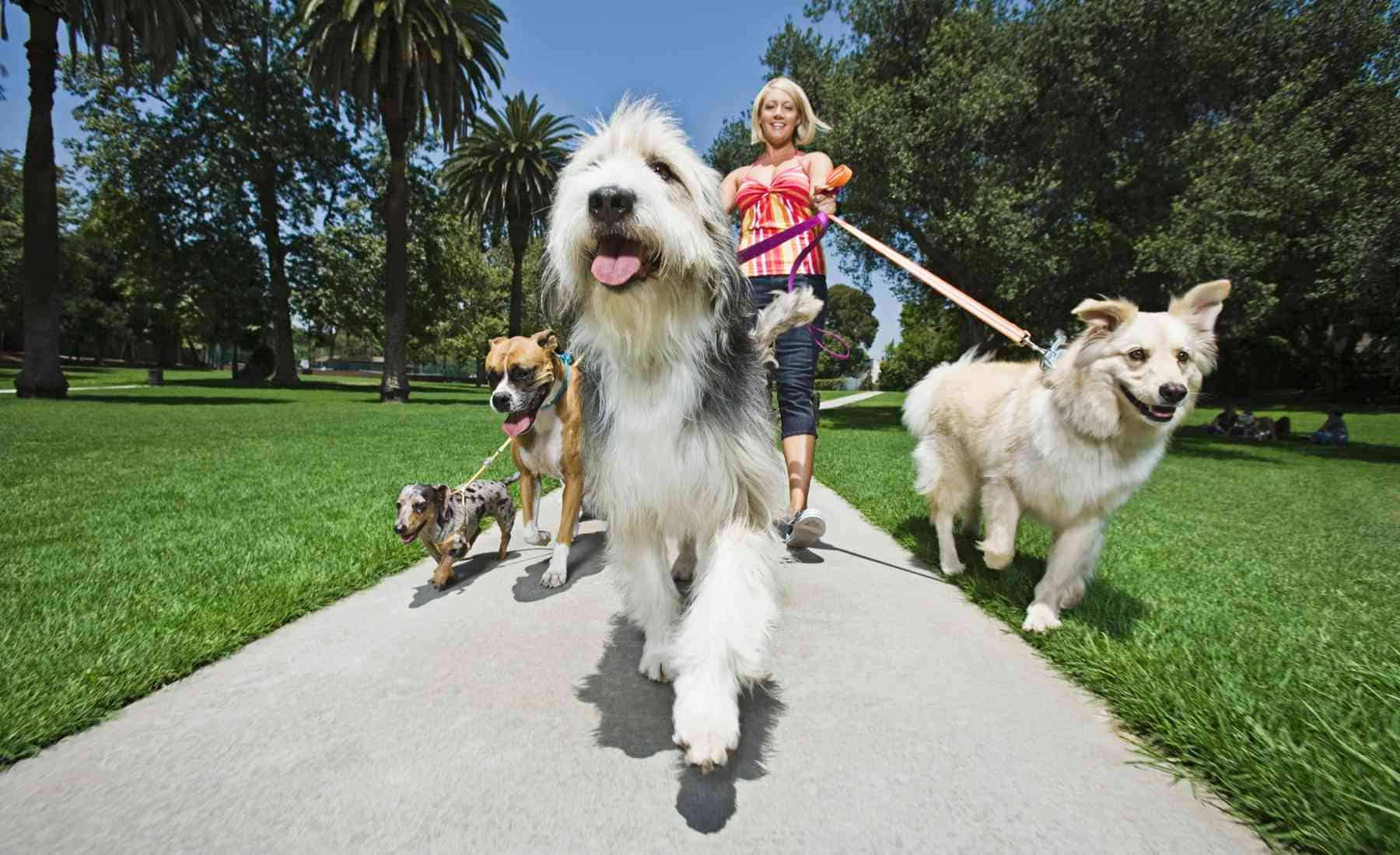 Make $500 a Day - Dog Walking