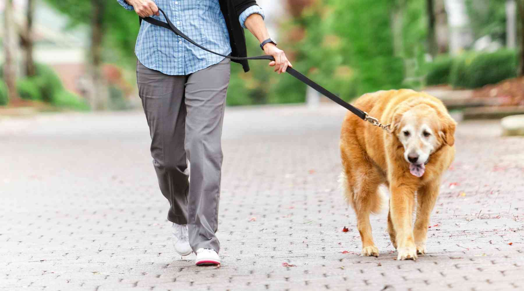 How to Make Money Without a Job - Dog Walking