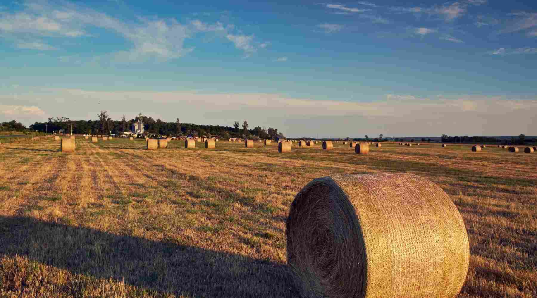 Best Income Producing Assets - Farmland
