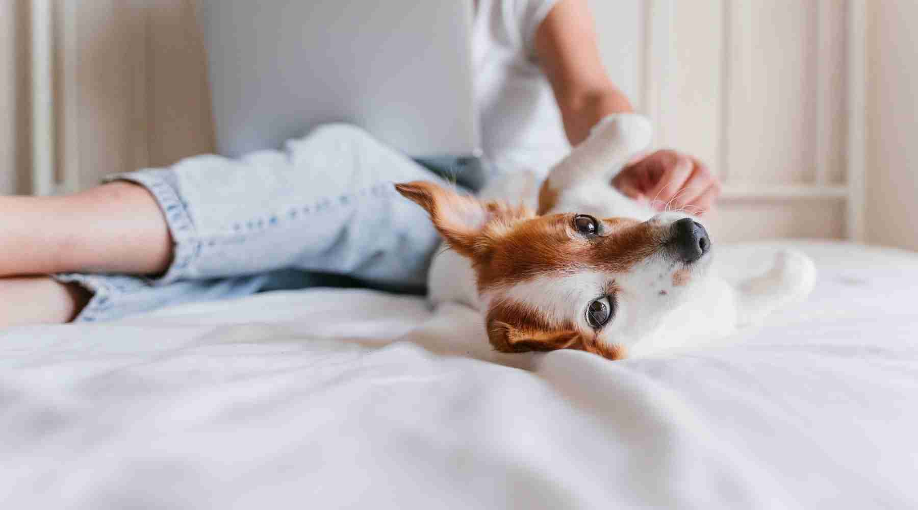 How to Make $400 Fast - Pet Sitting